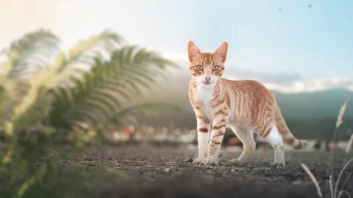 Cat in the nature