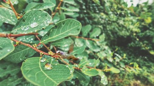 leaf and the hummingbird