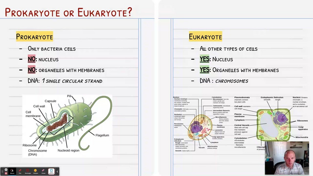Topic 6: Prokaryote vs Eukaryote