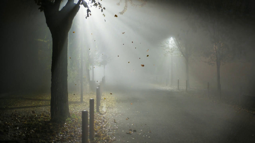 Steer in the night