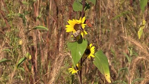 Gayle Marsh-landowner talks about Divots in the Pivots