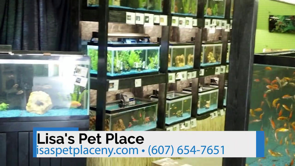 Pet Store in Painted Post NY, Lisa's Pet Place