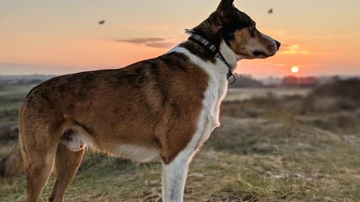 Dog watching the birds