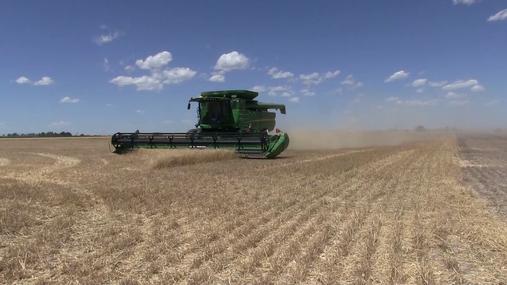 Wheat Harvest Broll Full.mp4