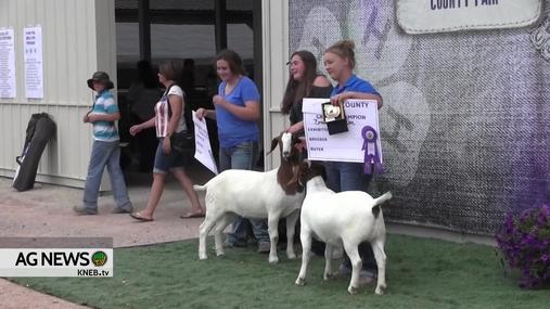 Goshen County 4-H Goat Show