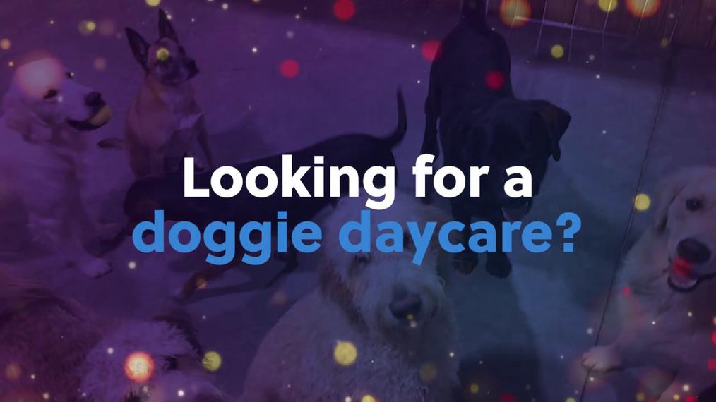 Dog Daycare in Ankeny IA, Wild Paws