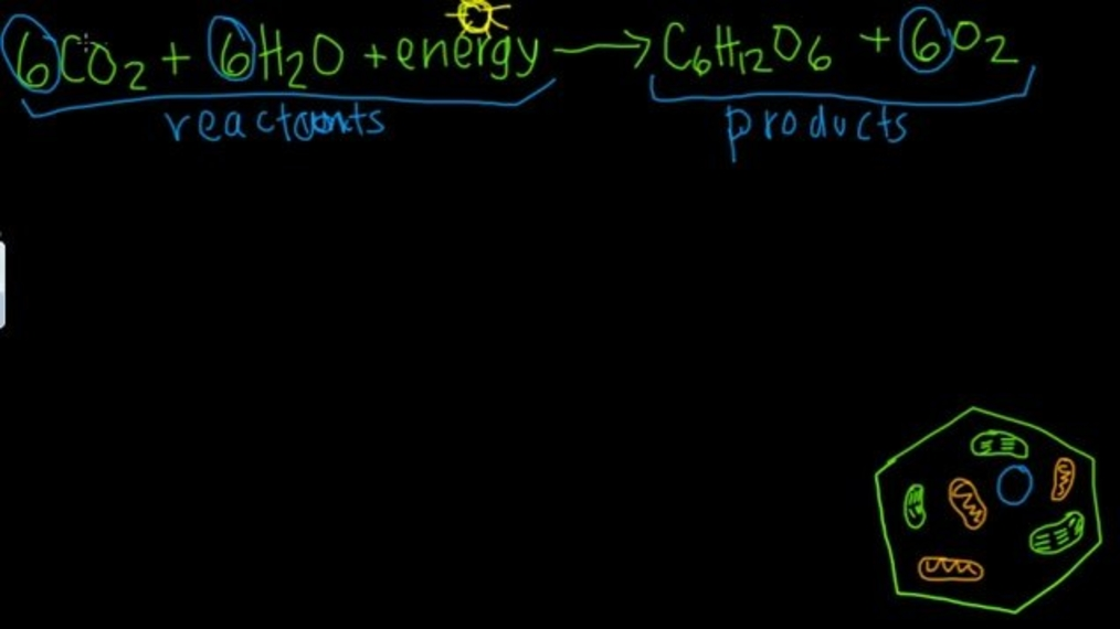 Photosynthesis and Respiration.mp4