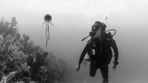 Snorking with a meduza