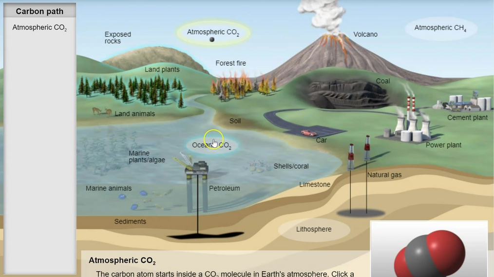 Topic 4: Carbon Cycle Gizmo Intro
