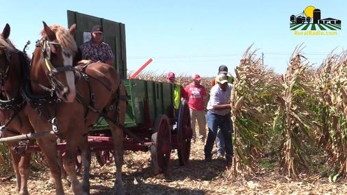 Nebraska State Hand Corn Husking Contest
