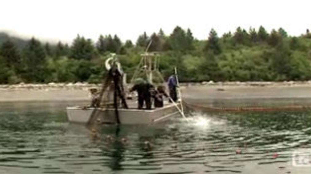 Oil Spill & Food Web Contamination.mp4