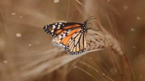 Butterfly field bokeh filter