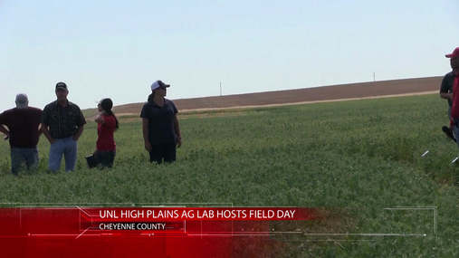 Pea and Wheat Field Tour in Cheyenne County