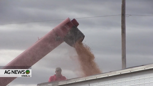 Fridays in the Field: November Dry Bean Harvest in the Panhandle