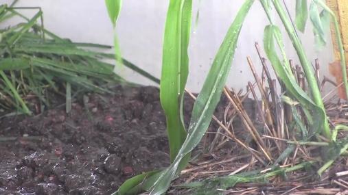 Soil Health Field Day Video Final.mp4
