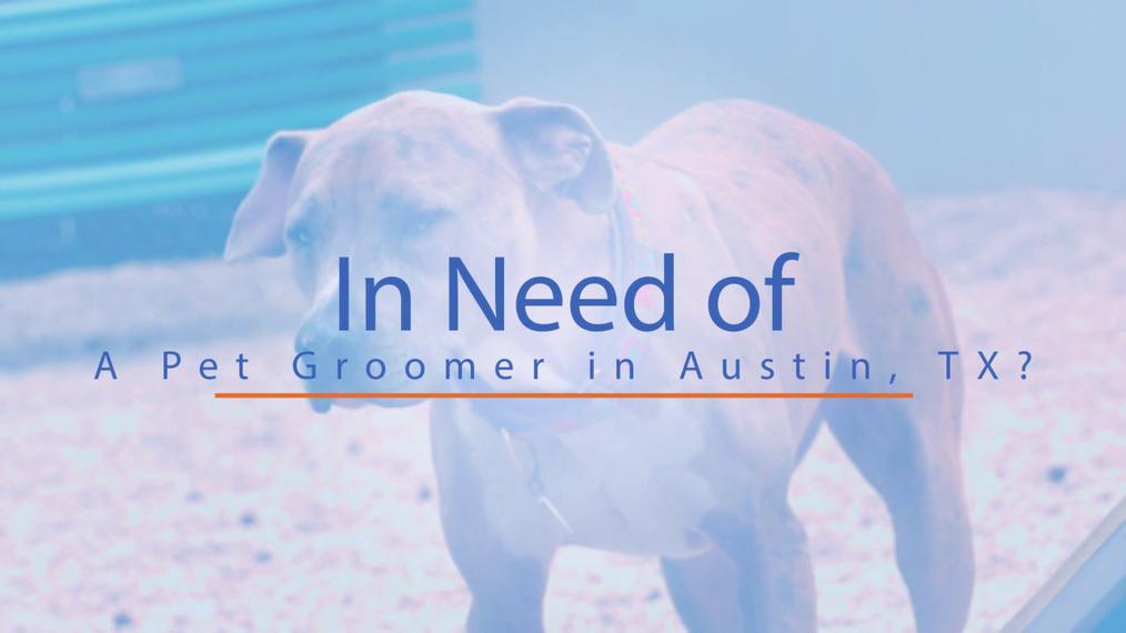 Pet Groomer in Austin TX, Texas Pet Styling