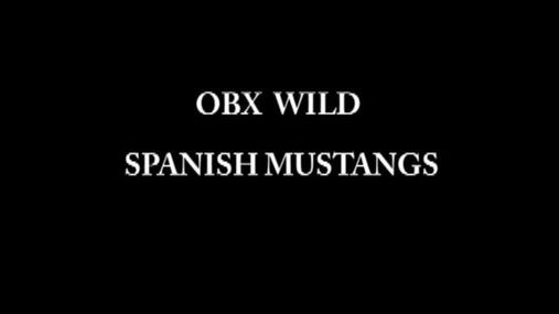 10 MIN.Filler Mustangs