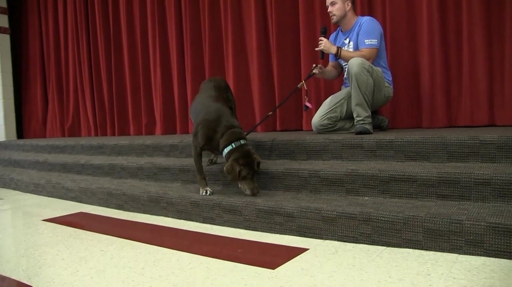 Rob Kugler travels country with 3-legged best friend
