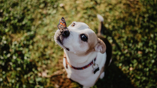 Butterfly on the nose of the cute dog