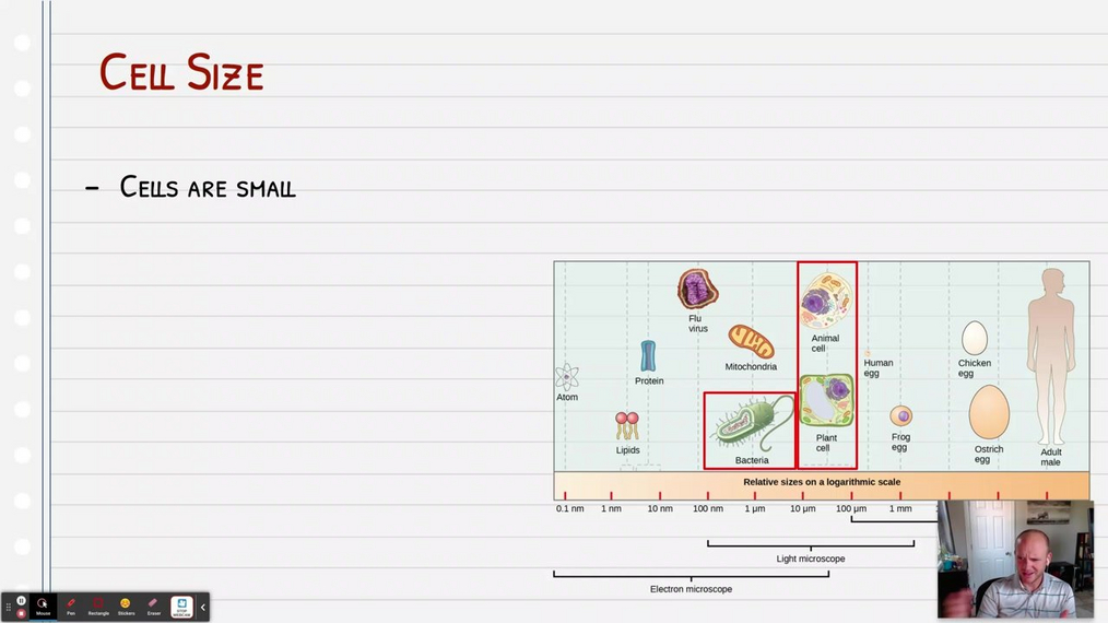 Topic 6: Cell Size